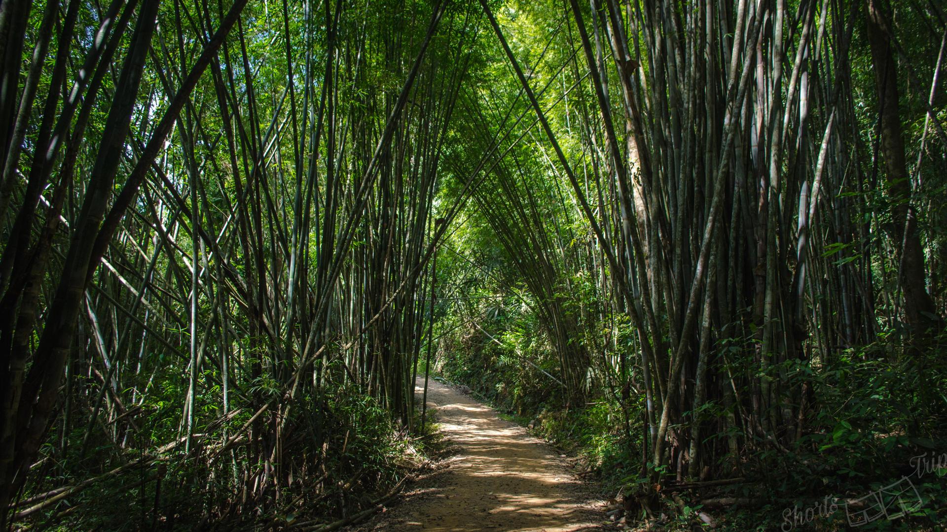 khao sok, khao sok np, khao sok bamboo, khao sok without guide