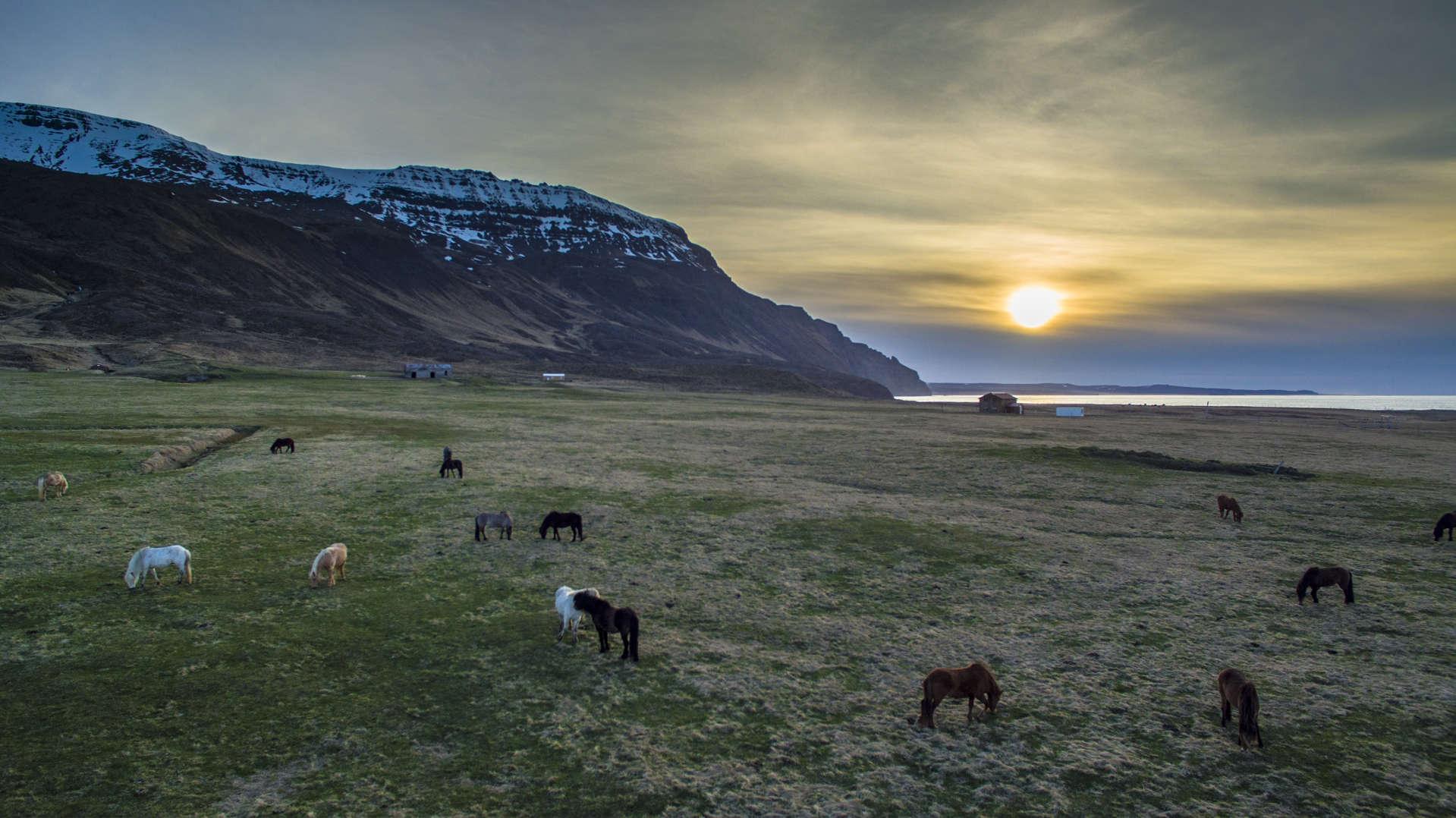 gretigslaug, horses gretigslaug, gretigslaug western fjords, gretigslaug iceland