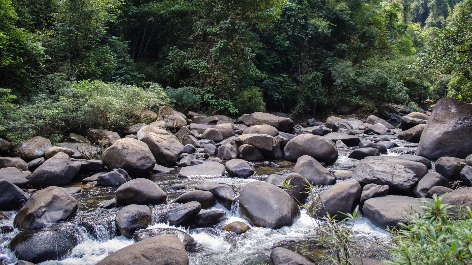 khao sok without guide, khao sok national park