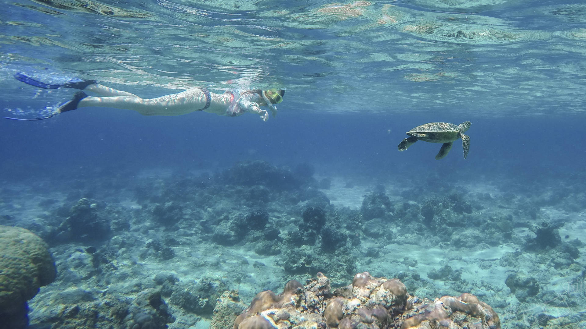 turtle gili meno, turtle snorkel meno, turtle indonesia, girl and turtle