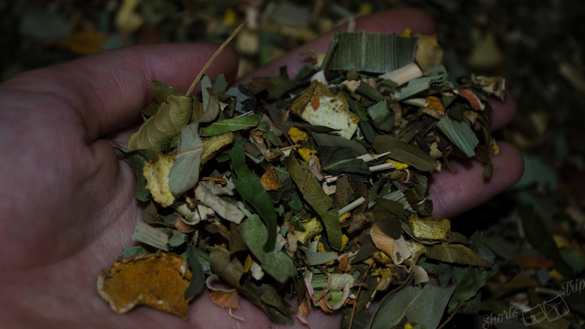 thai herbs, thai traditional herbs, thai herbs garden