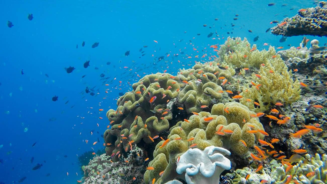 banda islands, banda island, banda neira, pulau hatta, hatta island, best snorkeling in the world, best snorkelling indonesia, underwater world indonesia, hata island, travel hatta island
