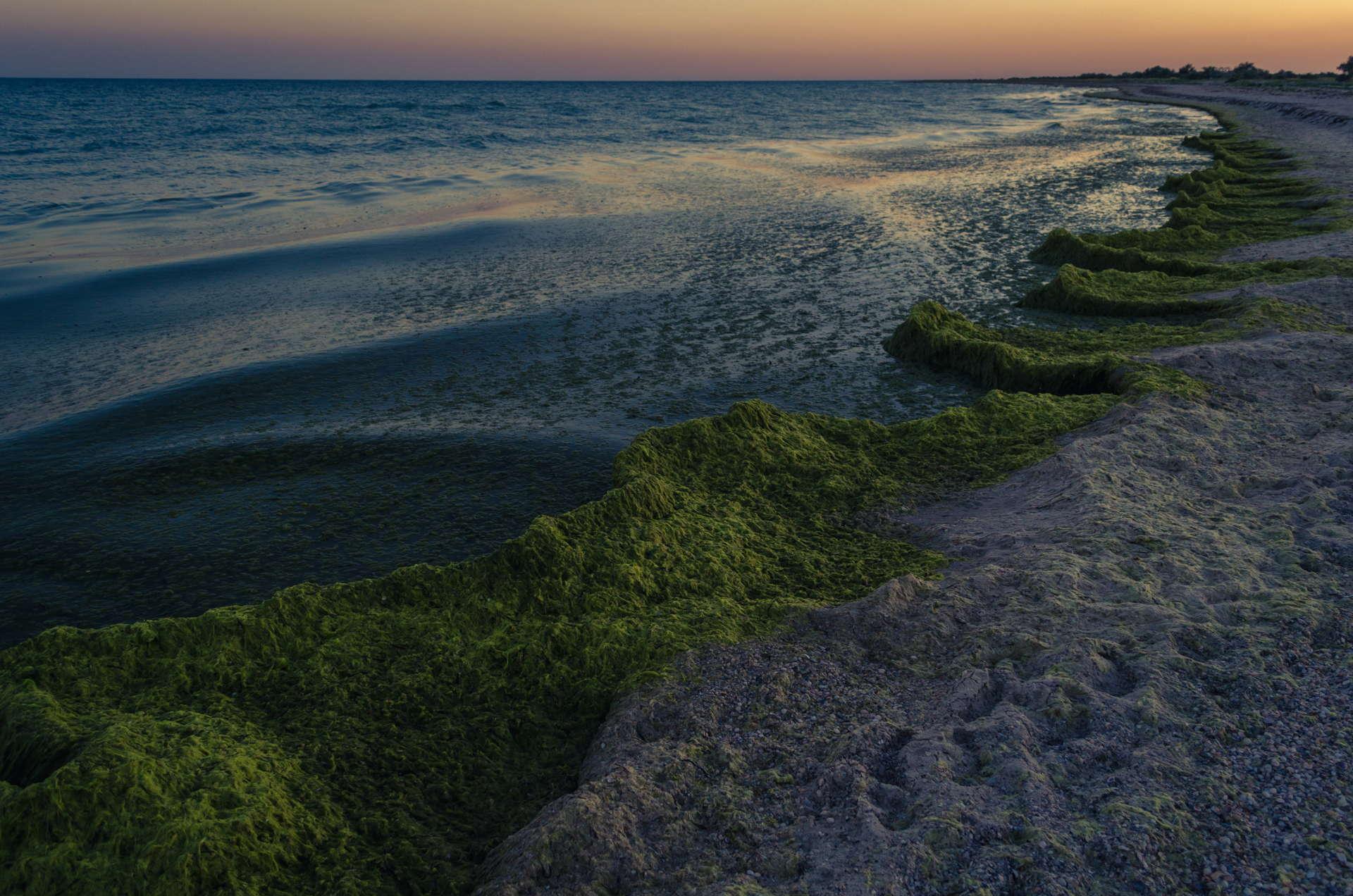 Остров Джарылгач - Украинские Мальдивы, джарылгач, украинские мальдивы, остров джарылгач, дикая природа джарылгача, закат на джарылгаче, джарылгачский национальный парк